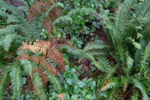 leaves and ferns detail