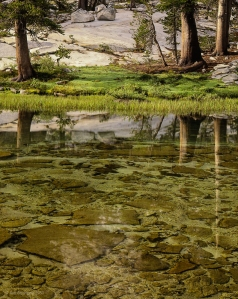 Reflection, Lyell Fork of the Merced River, Yosemite National Park;  From scanned 4X5 Polaroid transparency