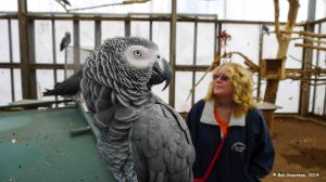 Dee Dee and African Gray parrot, Oasis Bird Sanctuary, near Benson, Arizona