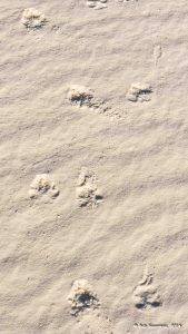 Charlie's been here.  White Sands National Monument, New Mexico