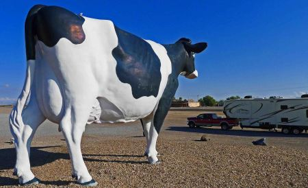 Giant cow, probably affected by CIA Area 51 'testing' in the 1950's