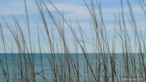 Grasses and ocean, near Mexico Beach, FL.