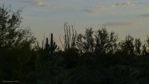 Dusk, Lost Dutchman State Park, Apache Junction.