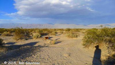 Charlie in Desert