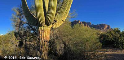 Cactus Panorama