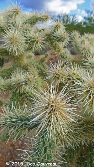 Cholla Close Up