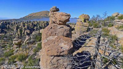 Rocks and Dead Tree Chir