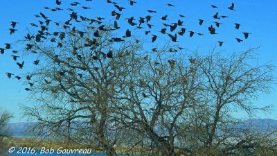 Flying Birds at Roper Lake