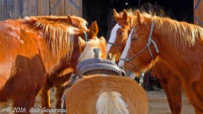 Horse Meeting